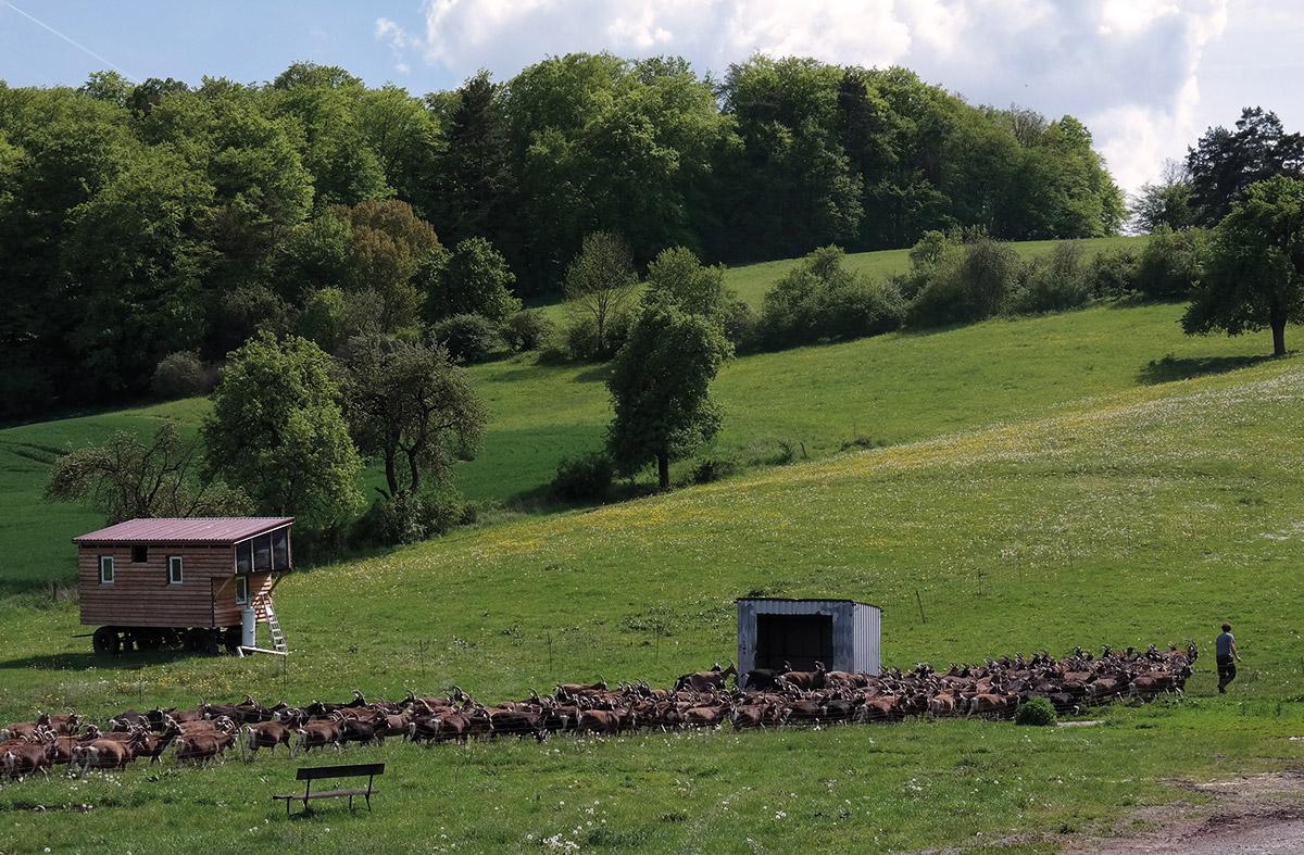 Ziegen auf der Wiese Hof Rösebach